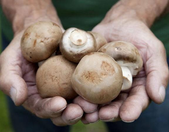 size_810_16_9_cogumelos-mao