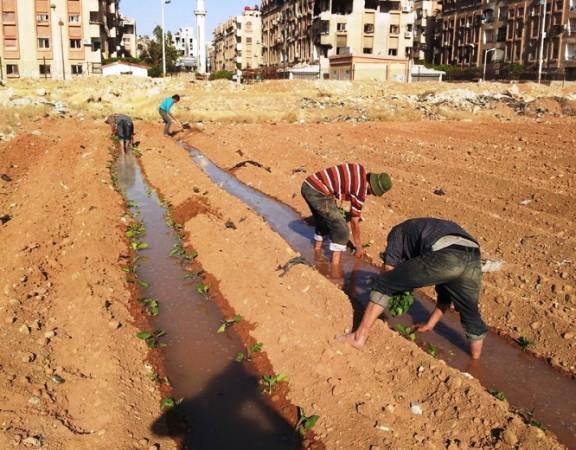 guerra-síria-aposta-hortas-urbanas-conseguir-alimentar-população