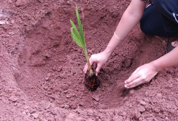 tree1_1461477110-e1479412830319
