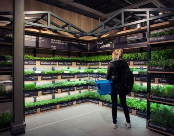 holanda-ganha-primeiro-supermercado-com-estufa-interna-para-comercializar-ervas-frescas