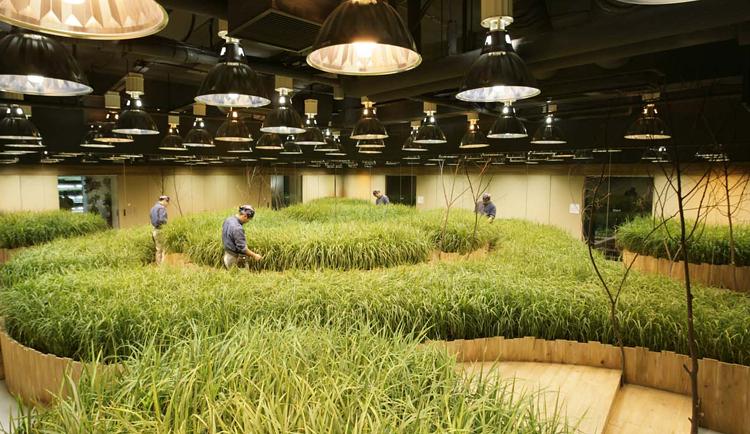 Horta urbana é feita em antigo banco no Japão