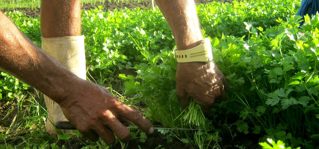 fundo-para-agricultores-familares