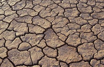 Projeto prevê restauração de áreas desertificadas no Brasil
