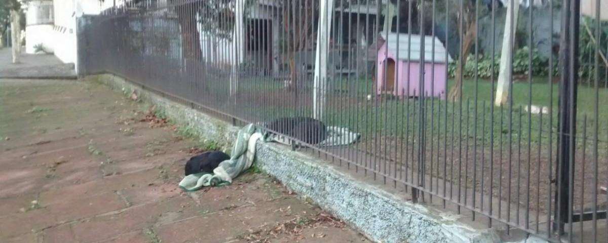 Cadela adotada compartilha cobertor com cão de rua no RS e foto viraliza