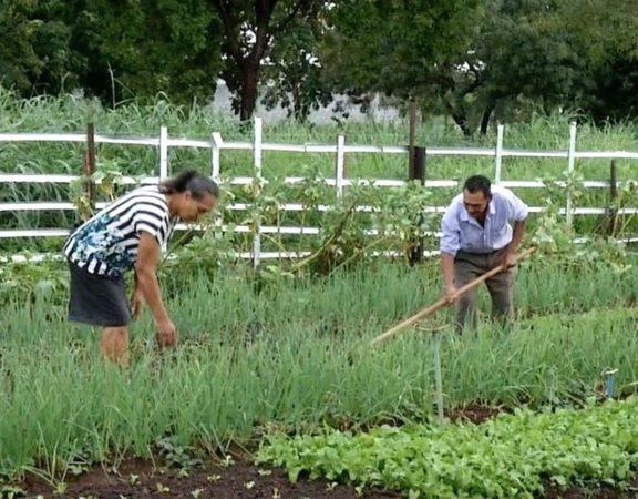 Terreno baldio é transformado em horta urbana por casal, em Palmas