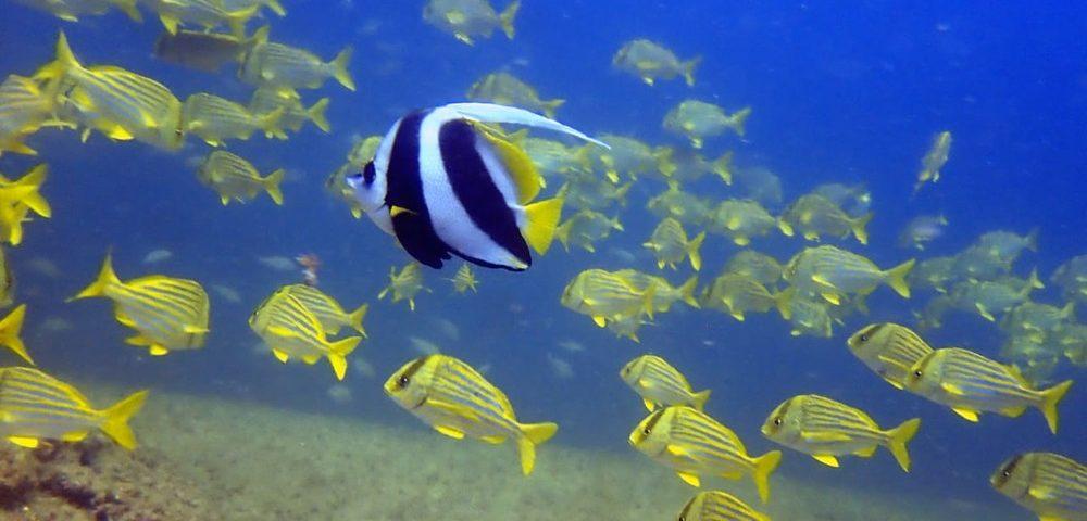 Pesquisa estima que 17% dos animais marinhos podem desaparecer até 2100