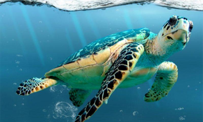 Quênia proíbe sacolas plásticas e número de animais marinhos sufocados por elas cai 67%